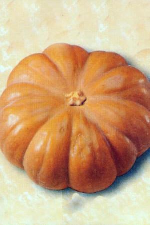 Semences potagères : Potiron Musquée de Provence (courge)
