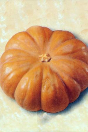 Semences potagères : Potiron Musquée de Provence BIO (courge)