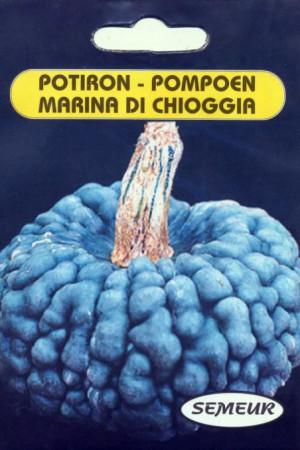 Semences potagères : Potiron Marina di Chioggia