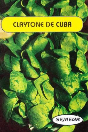Semences potagères : Pourpier D'hiver Claytone de Cuba