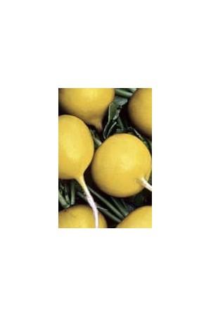 Semences potagères : Radis Zlata