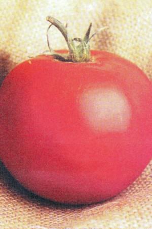 Semences potagères : Tomate Pyros F1