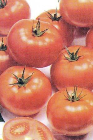 Semences potagères : Tomate Fandango F1