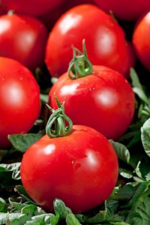 Semences potagères : Tomate ACE 55 VF BIO