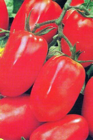 Semences potagères : Tomate San Marzano