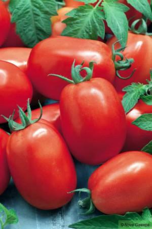 Semences potagères : Tomate Roma BIO