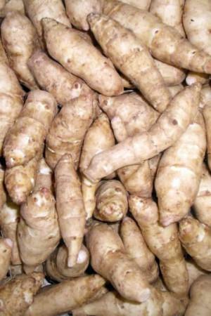 Semences potagères : Topinambour Fuseau