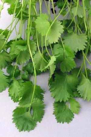 Semences condimentaires : Anis vert Anis vert