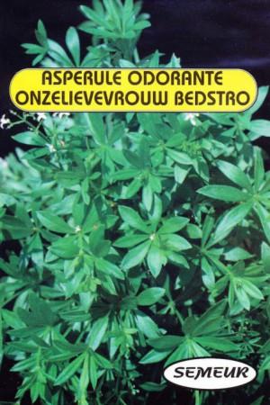 Semences condimentaires : Aspérule odorante Aspérule odorante