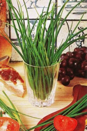 Semences condimentaires : Ciboulette  Civette