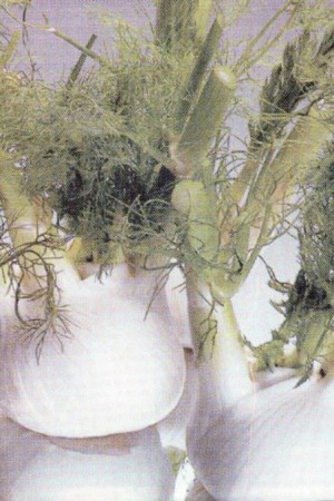 Semences condimentaires : Fenouil Carmo F1