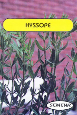 Semences condimentaires : Hysope Hysope
