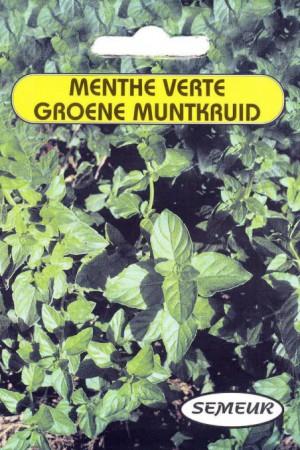Semences condimentaires : Menthe Spicata (verte)