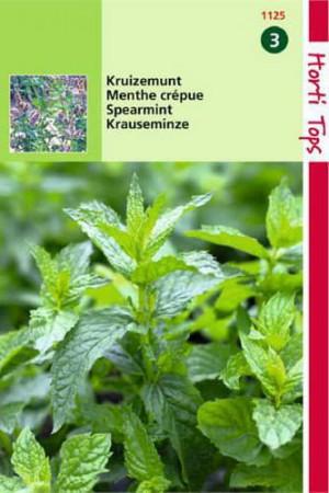 Semences condimentaires : Menthe Crépue