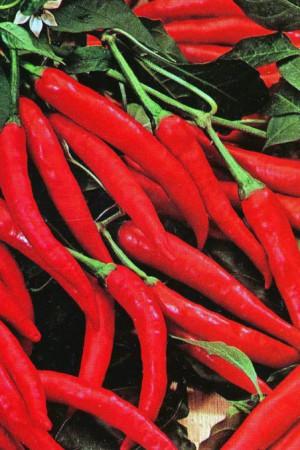Semences condimentaires : Piment de Cayenne