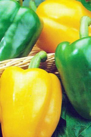 Semences condimentaires : Poivron Yolo Wonder