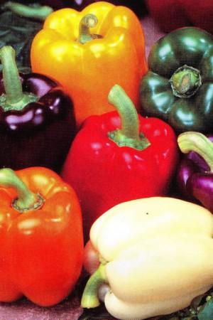 Semences condimentaires : Poivron Mélange 5 couleurs