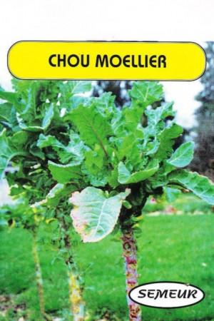 Engrais verts - Fourragères - Gazons  : Fourragères Chou Moellier blanc