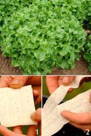 Rubans à semer : Laitue à couper Green salad Bowl
