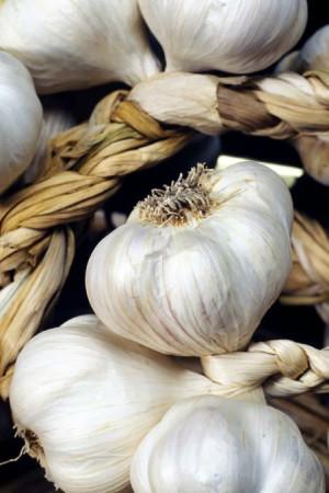 Ail - Echalote - Oignon : Ail  Blanc