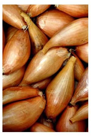 Ail - Echalote - Oignon : Echalote  Cuisse de poulet Longor