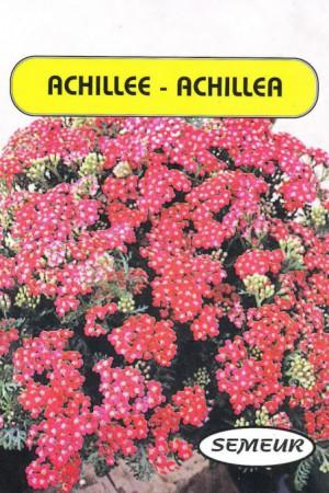 Semences de fleurs : Achilée Rouge