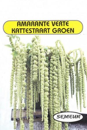 Semences de fleurs : Amarante Green cascade