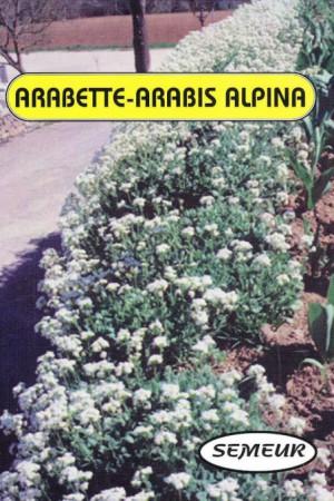 Semences de fleurs : Arabis Arabette blanche