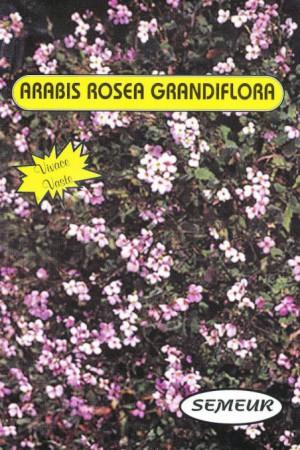Semences de fleurs : Arabis Arabette rose