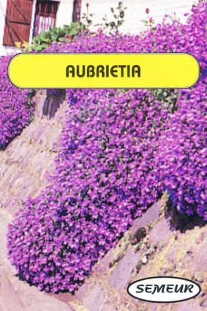 Semences de fleurs : Aubretia Aubretia