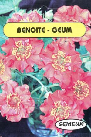 Semences de fleurs : Benoite (Geum) Mrs Bradshaw