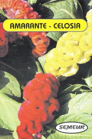Semences de fleurs : Célosie Crête de coq