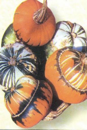 Semences de fleurs : Coloquinte Bonnet turc
