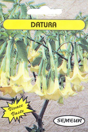 Semences de fleurs : Datura Belle blanche