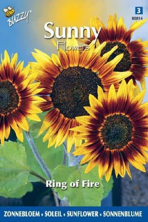 Semences de fleurs : Helianthus Ring of fire