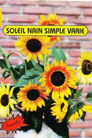 Semences de fleurs : Helianthus Simple varié 120 cm