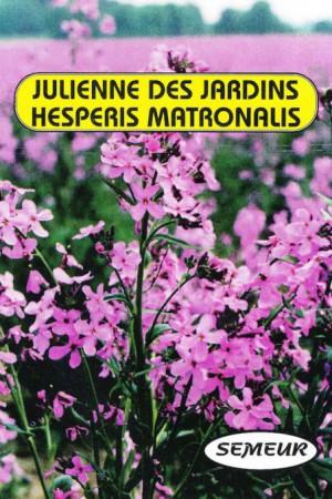 Semences de fleurs : Julienne Des jardins