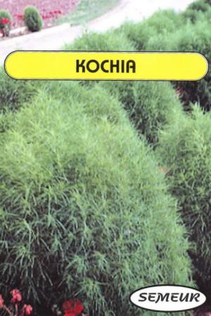Semences de fleurs : Kochia Trichophylla