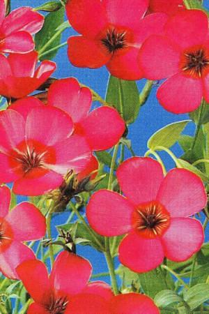 Semences de fleurs : Lin A fleur rouge