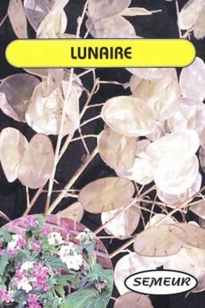 Semences de fleurs : Lunaire Monnaie du Pape