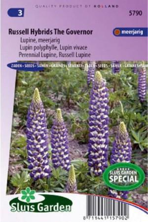 Semences de fleurs : Lupin De Russel The Governor