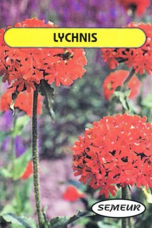 Semences de fleurs : Lychnis Crois de Jérusalem