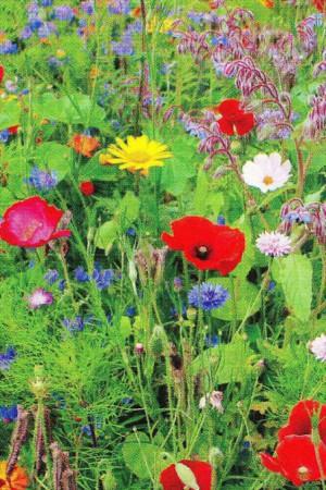 Semences de fleurs : Mélange de fleurs Fleurs d'été