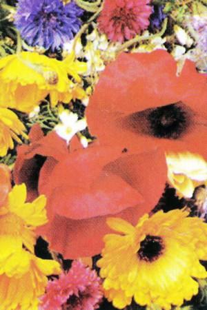 Semences de fleurs : Mélange de fleurs Fleurs à couper