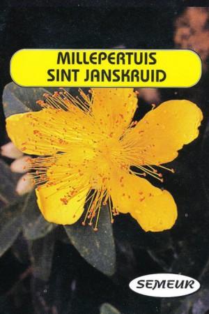 Semences de fleurs : Millepertuis Herbe de la Saint Jean