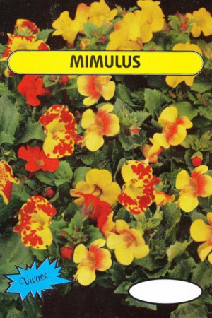 Semences de fleurs : Mimulus En mélange