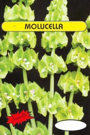 Semences de fleurs : Molucella Cloches d'Irlande