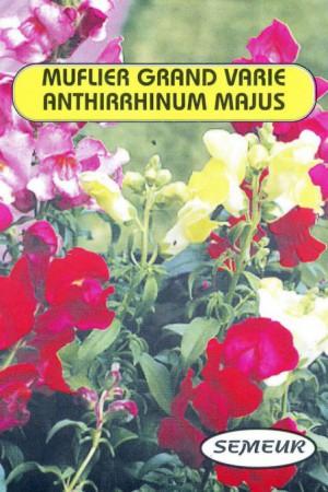 Semences de fleurs : Muflier Maxima