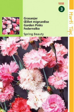 Semences de fleurs : Œillet Mignardise