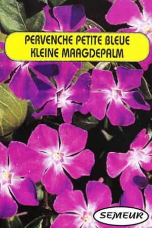 Semences de fleurs : Pervenche De Madagascar